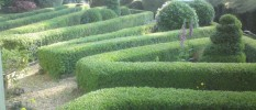 hedge cutting and topiary south devon